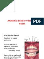 Anatomia-buzelor.-Vestibulul-bucal.ppt