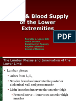 Nerve and Blood Supply of Lower Extremities