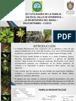 Taxonomia y Utilidades de La Familia Marantaceae en El Valle de Kosñipata Cusco