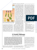 G Proteins Pathways
