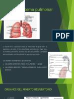 Anatomia sistema pulmonar.pptx