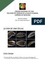Semana 6-Ciclo Celular y Mitosis