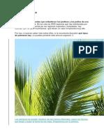 TIPOS DE PALMERAS.docx