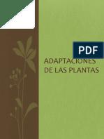 Adaptaciones de las plantas.pptx