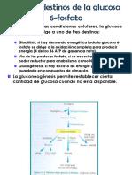 Ruta_de_las_pentosas_fosfato.pdf