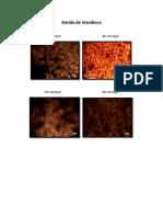 Microscopia Ótica dos Amidos.pdf
