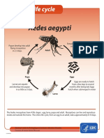 mosquitolifecyclefinal.pdf