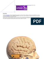 Costellazioni del Cervelletto.docx