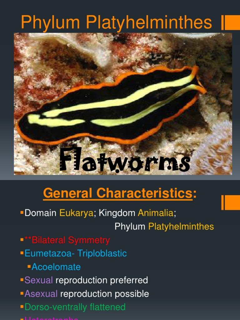 biologie phylum platyhelminthes tratamentul paraziților subcutanati