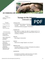 La Tortuga de Río Sabanera (Podocnemis Vogli)