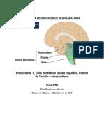 Practica 1 Neuro