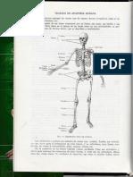 Esqueleto Anatomía Quiroz 1