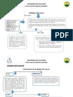 Botánica Del Cacao Diario Reflexivo