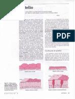 01.CAPÍTULO -6-Epitelio.PDF.pdf