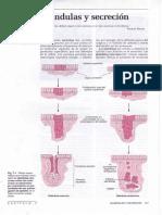 02.CAPÍTULO -7-Glándulas y secreción .PDF.pdf