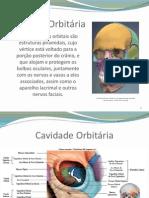 Cavidade_Orbitaria_Cavidade_Nasal_e_Seios_Paranasais_-_Turma_2_Ana_Margarida_Rosario_e_Joao_Tavares_