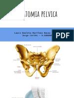 Anatomía pelvica femenina