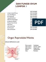 Struktur Dan Fungsi Ovum Embrio