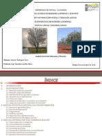 Análisis general del sector del almendro y pistacho