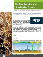 The-rice-growing-process-2013_Web.pdf