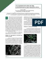 estadiofeekes.pdf
