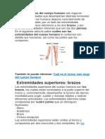 extremidades superiore e inferiores del cuerpo humano.docx