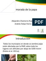 Punta Morada de La Papa (1)