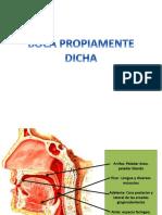 BOCA PROPIAMENTE.pptx