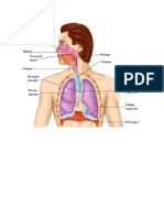 Sistema Respiratorio 02-12-2019