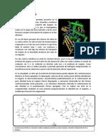 Hemocianina