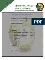fruticultura chirimoyo