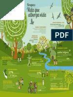 Infografia-BOSQUES-VxC-L.pdf