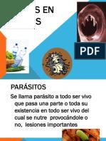 Paracitos en Alimentos Term