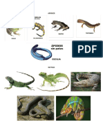Anatomiabiologia Molecular Citologia
