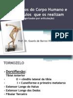 Musculos e Movimentos