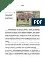 Wild Animal Descript