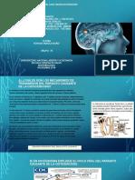 _trabajogrupal_ Estudio Del Caso Neurocisticercosis (2)