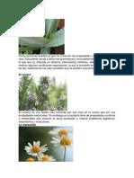 planta medicinales y alimenticias