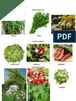PLANTAS DIGESTIVAS