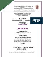 TRABAJO NEURONAS