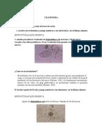 Trofozoitooooooo de Balantidium Coli en Fresco (Recuperado)