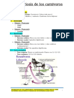 Ascarosis carnívoros