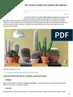 Técnicas de Como Cuidar Un Cactus de Interior Paso a Paso