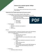 55-Funciones motoras de la medula espinal.docx