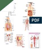 Sistema NerviosoSistema Digestivo