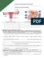 Practica Final Sistema Reproductor