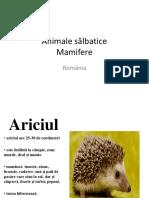 Mamifere Salbatice Din Romania