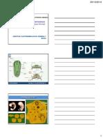 Odontogenesis 2014-20 Est