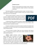 238198151-plantas-parasitas.pdf