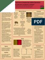 sicb poster pdf